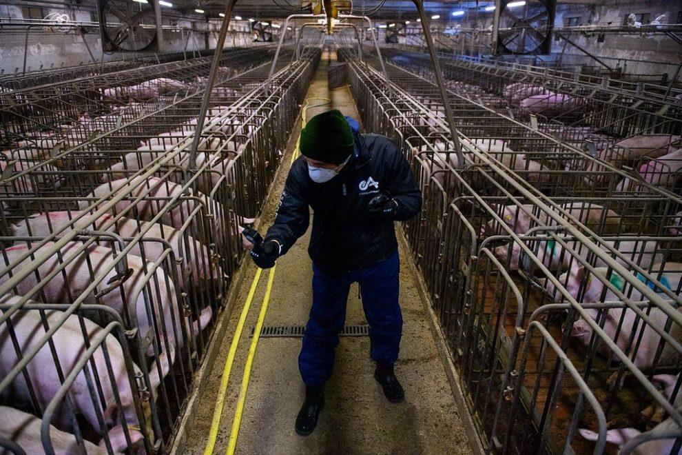 Risultati immagini per Effetto serra? Dipende soprattutto dallo sfruttamento degli animali...
