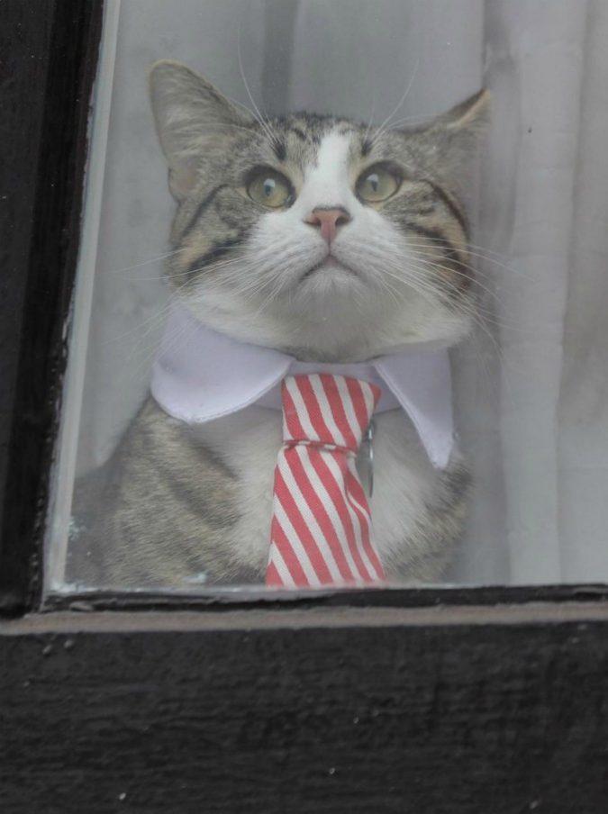 James, che fine ha fatto il gatto con la cravatta di Julian Assange? Ecco come è sfuggito a Scotland Yard