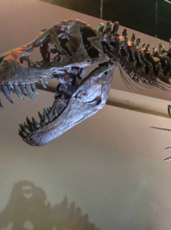 Chi vuole comprare un dinosauro? In vendita su eBay lo scheletro di un B-T Rex al costo di 2,95 milioni di dollari