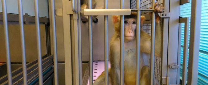Macachi rinchiusi in laboratorio, i loro sguardi sembrano chiederci: è davvero necessario?