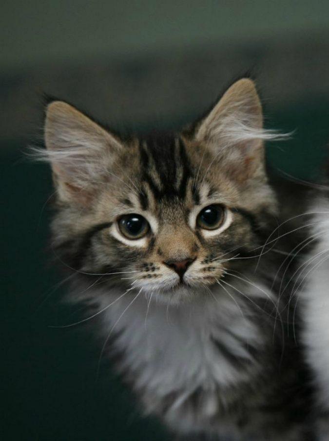 Tubercolosi nel cibo per gatti: contagiati 50 felini e anche 2 loro padroni