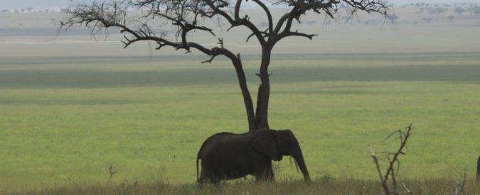 Africa, nasce la Grande muraglia verde. Così il clima torna a respirare (e pure noi)
