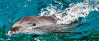 Delfinario Rimini, condannati ex direttore e veterinaria: animali erano maltrattati