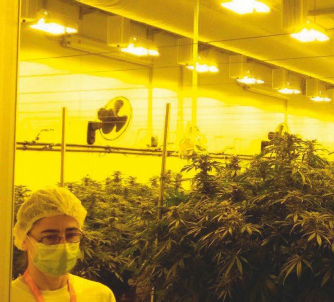 La cannabis medica: il piano Unipol e i privati che sperano