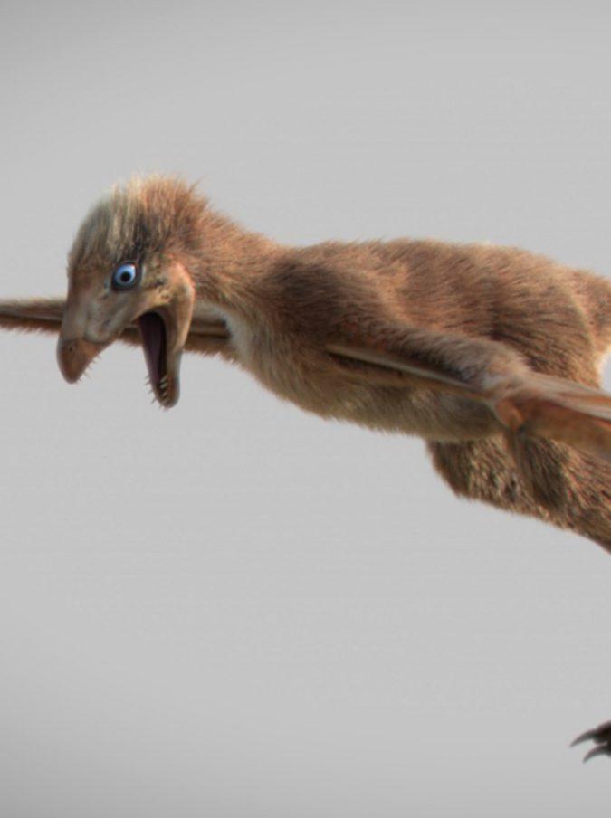 Scoperto il fossile di un dinosauro volante: ma come faceva a volare? Ecco la spiegazione