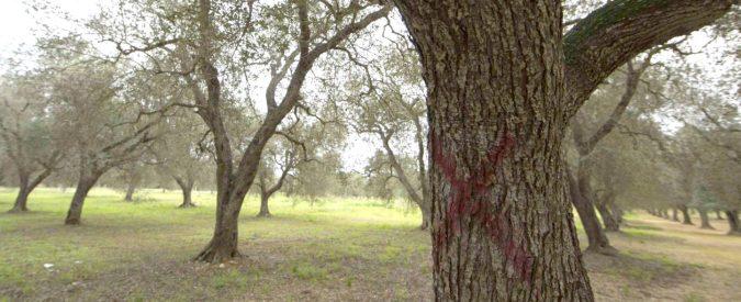 Xylella, la condanna a morte degli ulivi pugliesi va oltre l'attentato alla salute