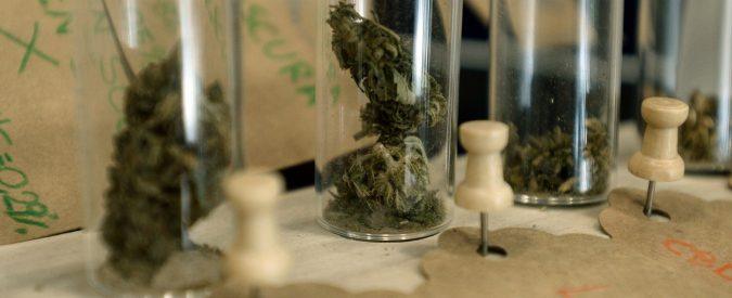 C'è chi crede che l'olio di cannabis curi i tumori. È falso, può alleviare solo gli effetti collaterali