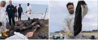 """Cefalù, capodoglio morto sulla riva. La denuncia di Greenpeace: """"Ecco tutta la plastica trovata nel suo stomaco"""""""