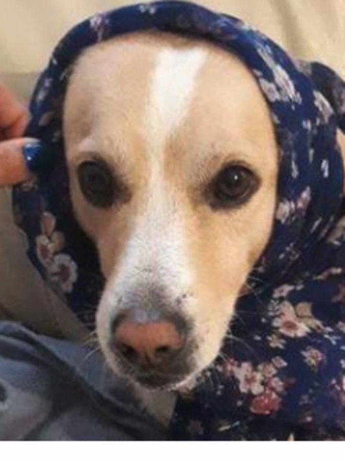 Uccise il cagnolino Remì con una fucilata davanti ai passanti: denunciato pensionato di 71 anni