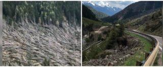 Dolomiti, la neve si scioglie e svela lo scenario apocalittico: migliaia di alberi spezzati lungo la strada. Le immagini