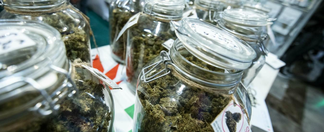 Cannabis light, i prodotti a rischio e i danni economici: ecco le sei conseguenze della sentenza della Cassazione