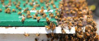 Coldiretti, dopo le cavallette in Sardegna, le api sciamano nel centro di Bologna e le cimici invadono il Nord Italia