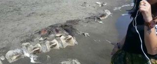 Orbetello, dalla spiaggia spunta lo scheletro gigante di una balenottera di 15-17 metri: il video del WWF
