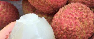 Almeno 31 bambini morti negli ultimi 10 giorni per una malattia cerebrale dopo aver mangiato dei lychee