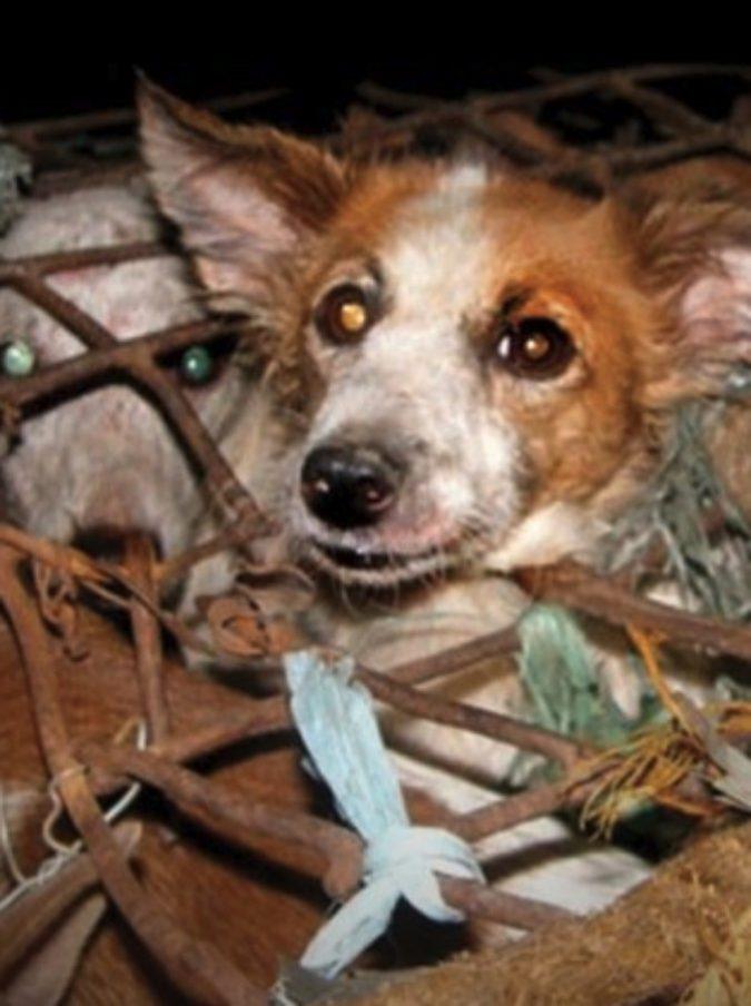 Yulin, anche quest'anno va in scena il festival delle barbarie a base di carne di cane: non è ora di togliercelo dalle palle?
