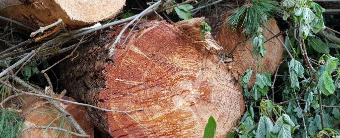 L'Ue vuole abbattere alberi per produrre energia pulita. Ma le foreste non sono fonti rinnovabili