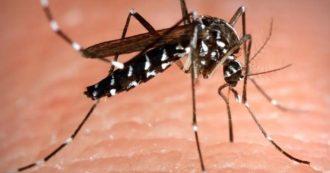 Zanzare, sale il rischio contagio del virus che colpisce il cervello: allarme esteso in altre 7 città