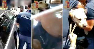 Napoli, chiuso in auto sotto il sole: la polizia salva un labrador. Proprietari denunciati
