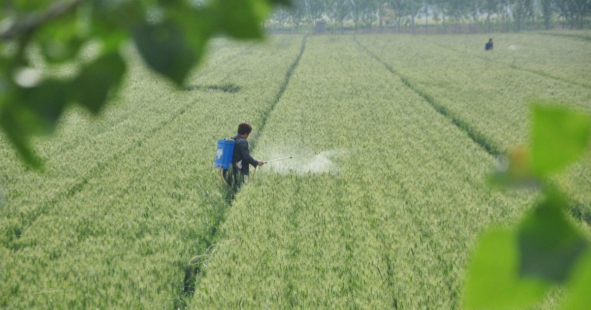 Esportiamo i pesticidi, e poi ce li ritroviamo nel piatto: la stampa internazionale
