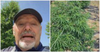 """Vasco Rossi nella piantagione di cannabis legale: """"Tira un'aria oscurantista e bigotta"""""""