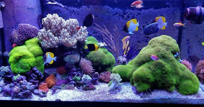Respirano tossina letale del corallo mentre puliscono l'acquario: intera famiglia in quarantena, la madre in fin di vita