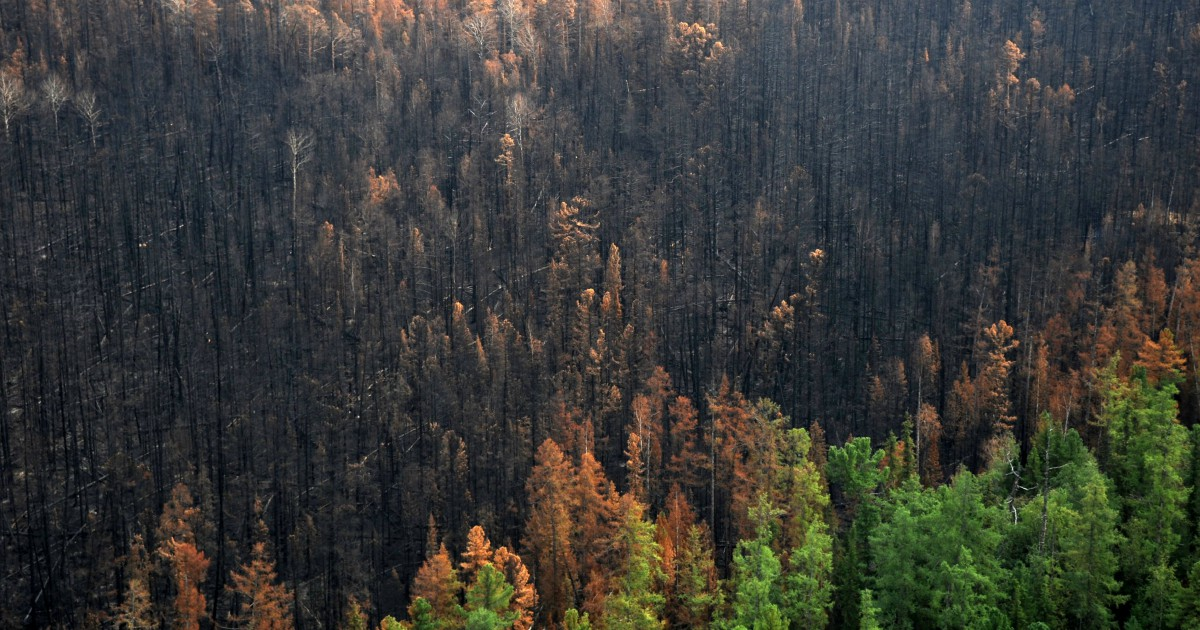 Siberia in fiamme e non solo, aspettiamo di estinguerci per dichiarare l'emergenza climatica?