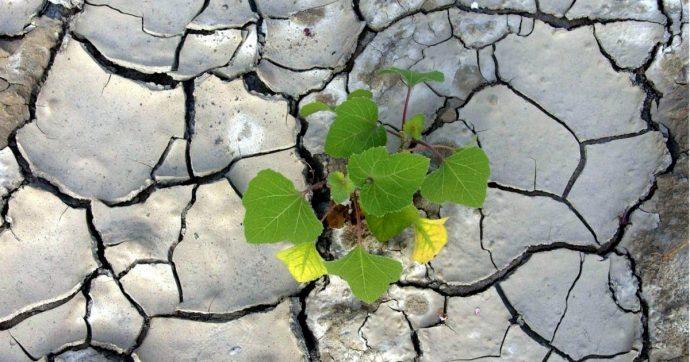 """Acqua, un quarto della popolazione mondiale rischia di rimanere senza. E l'Italia è tra i Paesi ad """"alto rischio"""""""