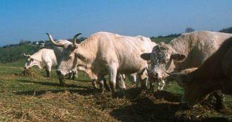"""Clima, il rapporto Onu: """"Mangiare meno carne o una dieta vegetale scelte fondamentali per salvaguardare l'ambiente"""""""