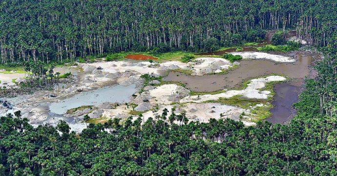 Cambiamento climatico, alberi extralarge entro il 2100 per effetto delle emissioni di CO2