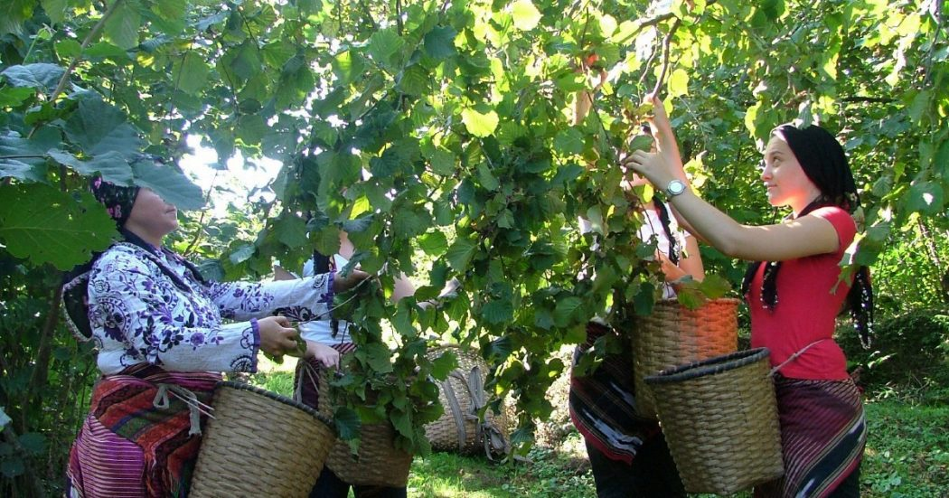 Nutella amara: il fatturato vola, lavoratori turchi affamati