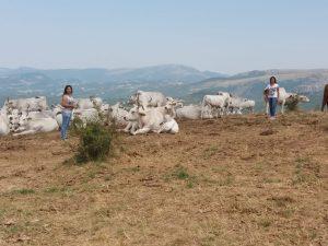 Terremoto Centro Italia, tre anni dopo gli sfollati sono anc