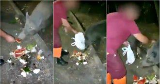 """Roma, operatori Ama danno rifiuti da mangiare ai cinghiali. Sindaca Raggi pubblica il video: """"Comportamenti inaccettabili da irresponsabili"""""""