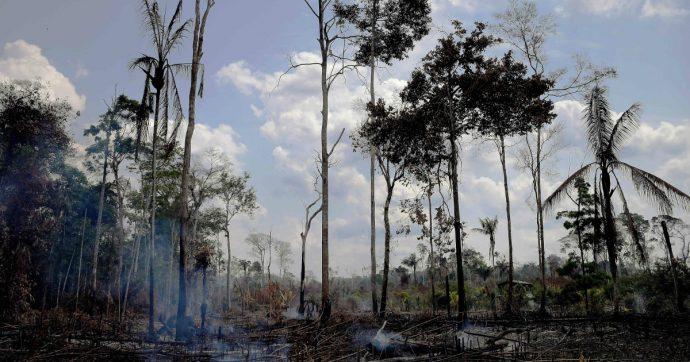 """Amazzonia in fiamme, """"per sfruttare le risorse minerarie. Ma necessario aiutare contadini a prevenire incendi: così li addestriamo da anni"""""""