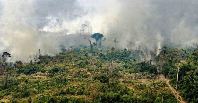 Cosa possiamo fare mentre l'Amazzonia è in fiamme