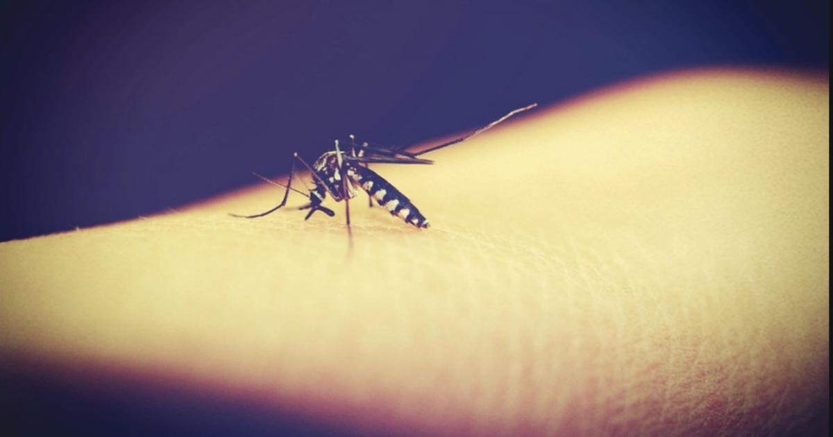 Zanzare, cronaca estiva di un duello all'ultimo sangue