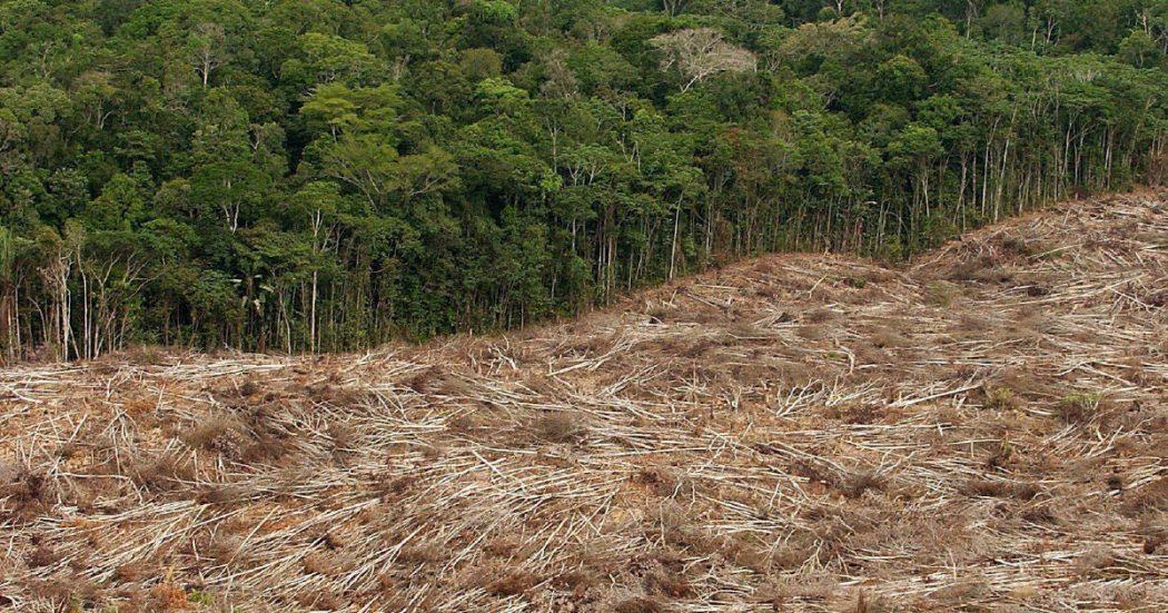 Biodiversità (tradita): nel Recovery italiano solo lo 0,8% dei fondi è destinato a foreste, mare e aria. E senza habitat gli animali contagiano l'uomo
