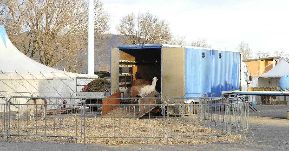 Animali, nascono tour operator contro la prigionia di circhi e zoo. Ora tocca a noi