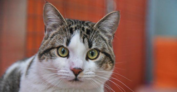 Arezzo, gatto morto dopo aver morso la proprietaria: aveva rarissimo virus tipico dei pipistrelli. Il sindaco emette due ordinanze