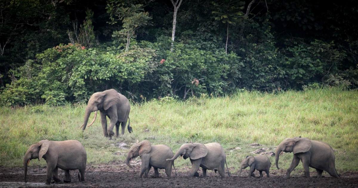 Norvegia paga 150 milioni di dollari al Gabon per la lotta alla deforestazione. Ma gli ambientalisti sono scettici