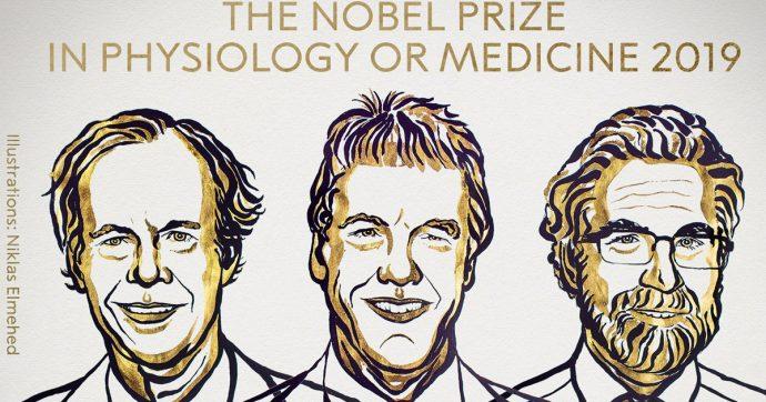 Nobel per la Medicina 2019, premiati Willian Kaelin, Peter Radcliffe e Gress Semenza