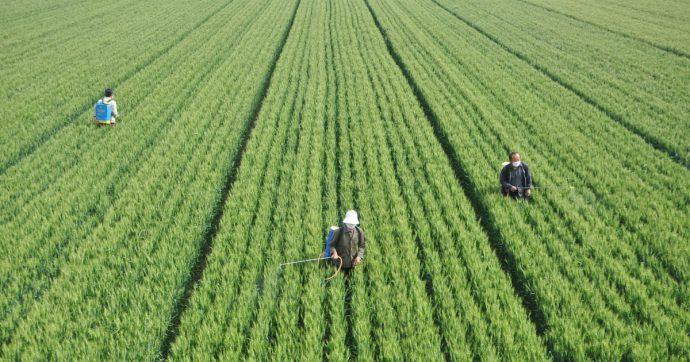 Pesticidi, dibattito pubblico sul Piano d'azione nazionale. Ma l'idea di fondo è solo chiacchiere e incentivo