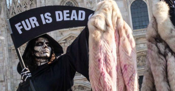 California, primo stato al mondo a vietare la produzione e il commercio di pellicce