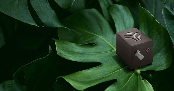 Che cosa dicono le piante? Ascoltatele con PlantWave