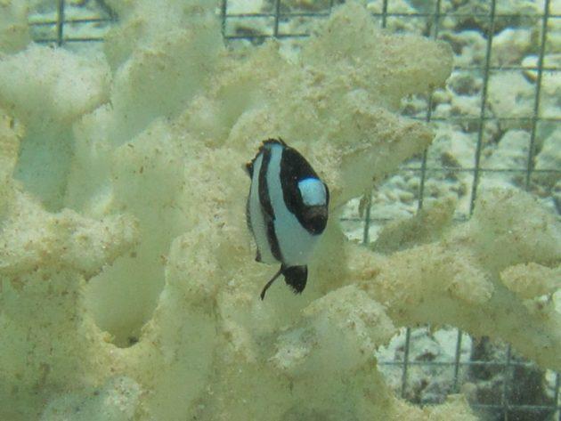 Il corallo stampato in 3D potrebbe aiutare le barriere coralline in via di ...