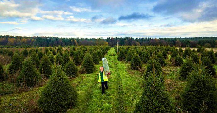 """Alberi esotici per salvare le foreste del Nord est, l'esperto: """"In Germania ha funzionato"""""""