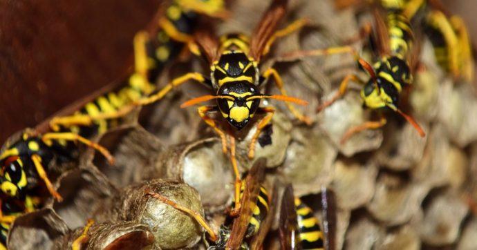 Guida turistica muore uccisa da uno sciame di vespe: il suo corpo recuperato dopo 4 giorni coperto dagli insetti