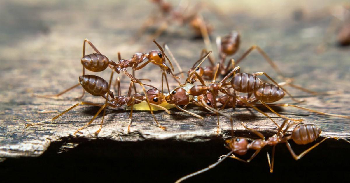 Egoiste, crudeli e pigre: le formiche ci insegnano come può essere noioso il matriarcato