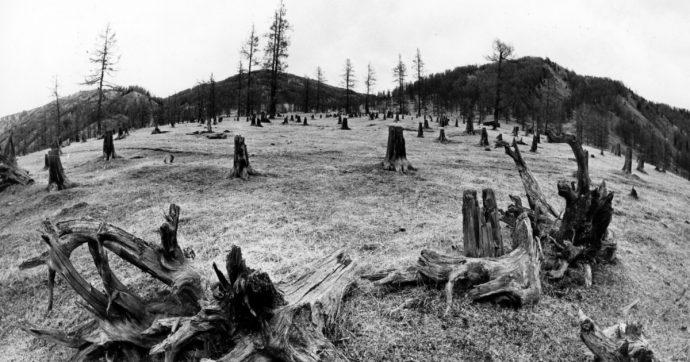 """Giornata nazionale degli alberi, l'allarme degli esperti: """"Nel 2019 incendi quintuplicati"""""""