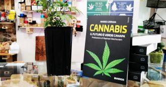 """""""Il futuro è verde canapa"""", in libreria il volume sull'evoluzione della cannabis nella scienza moderna: """"Sempre più presente in medicina"""""""