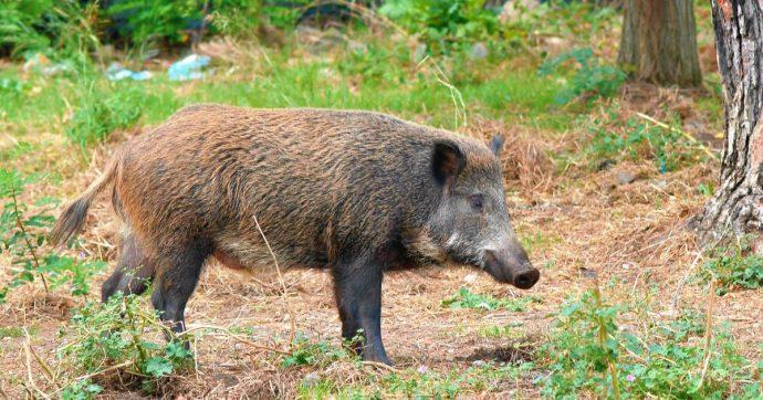 """Legge di Bilancio, la denuncia di Enpa, Lav e Wwf: """"Emendamenti per 'licenza di uccidere' qualsiasi animale selvatico. Vanno fermati"""""""